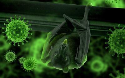 Corona-Virus bei Tieren: Gefährdung, Vorsichtsmaßnahmen und Behandlungsmöglichkeiten